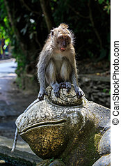 Monkey sitting on top of a frog statue in Monkey Forest at Ubud