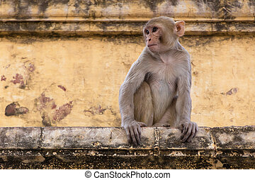 monkey sitting on wall of old building