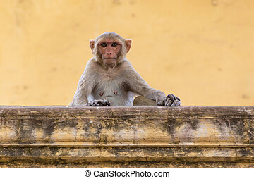 monkey sitting on wall of old house