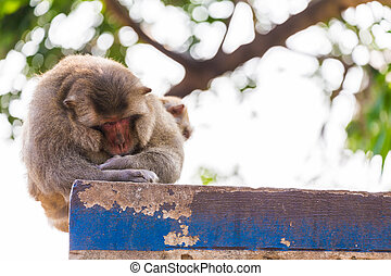 Monkey sleeping on the fence