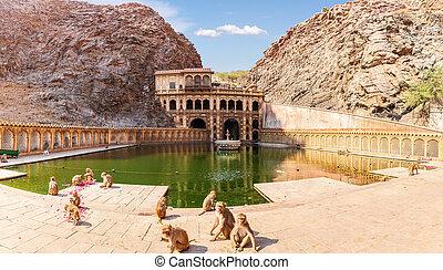 Monkey Temple and playing monkeys near the pool, Jaipur, India
