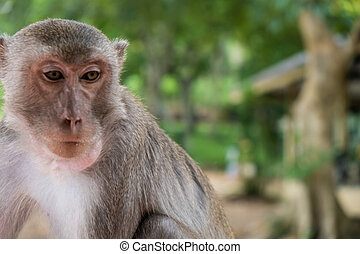 monkey. The concept of animals in the zoo. soft focus