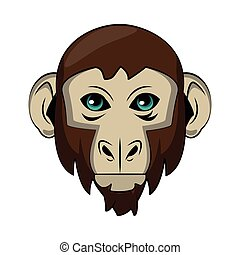 Monkey Wild animal