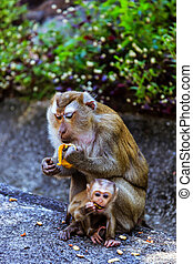 Monkey with a baby at Monkey Hill - Monkey with a baby ...