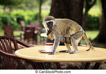 Monkey with a baby drinking from a cup