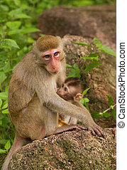Monkey with a baby