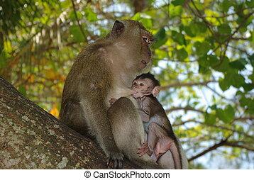 Monkey with babe