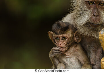 monkey with baby closeup
