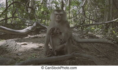 Monkey with baby eating in forest