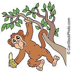 Monkey with banana on tree