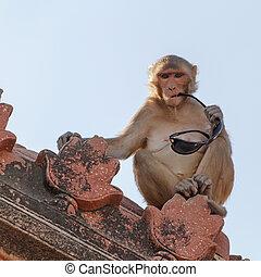 monkey with eyeglasses
