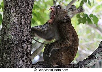 Monkey with open mouth on the tree - Exotic animals,...