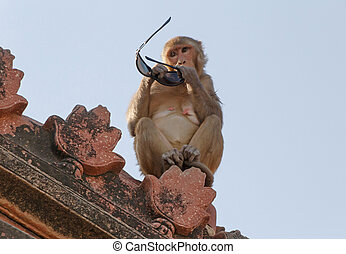 monkey with sunglasses on roof of temple