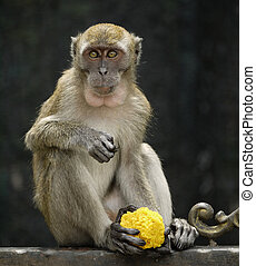 Monkey with Traditional Indian Food
