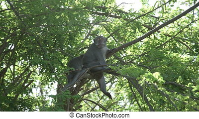Monkeys are sitting in Tree Forest Bali Indonesia