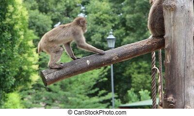 Monkeys climb tree