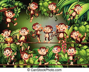 Monkeys doing different things in the jungle
