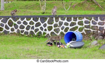 monkeys eating from garbage