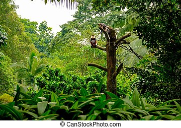 Monkeys family siting on the wood branch in tropical rainforest.