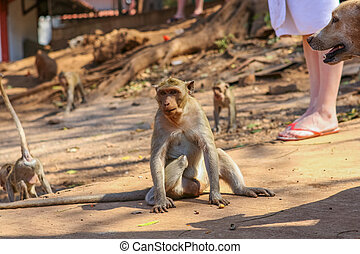 monkeys., groep