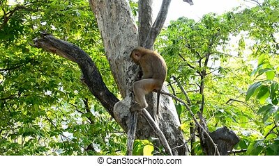 Monkeys in a forest stock footage