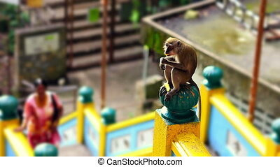 monkeys in batu cave