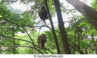 monkeys in the trees in the jungle