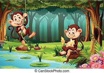 Monkeys living in the jungle