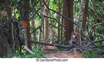 monkeys on the branches of the trees in the jungle. tropical Asia