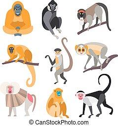 monkeys., primates, conjunto, vector, ilustración