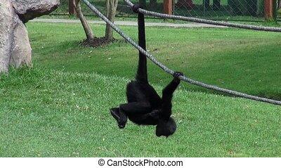 Monkeys, Primates, Zoo Animals, Wildlife, Nature
