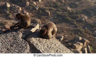 monkeys sitting on top of a mountain