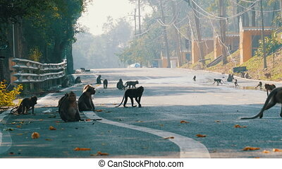 Monkeys walk along the Road of Jungle in Thailand - Monkeys...