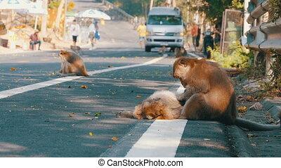 Monkeys walk along the Road of Jungle in Thailand - Monkeys...