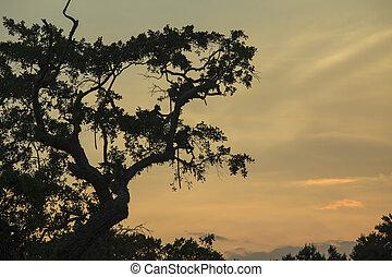 Monkies in a tree
