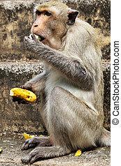 mono, con, plátano