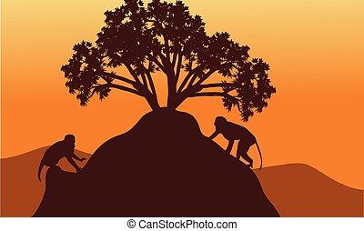 mono, en, colinas, paisaje, en, ocaso