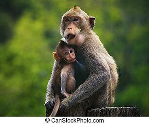 mono, madre y bebé, bebida, mil