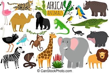 mono tití, fauna, animales, mono, loro, animals., rinoceronte, vector, vario, áfrica, africano, o, leopardo
