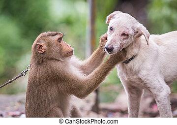 mono, verificar, para, pulgas, y, hace tictac, en, el, perro