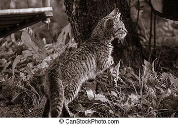 Monochrome curious kitten behing tree on grass