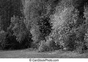 Monochrome forest landscape in the autumn morning. Natural background black and white
