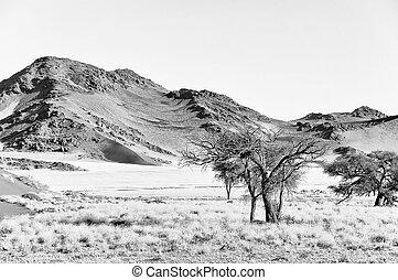 Monochrome grass, dune and mountain landscape near Sossusvlei,