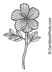 Hand drawn Flower - Monochrome Hand drawn Flower sketch. ...
