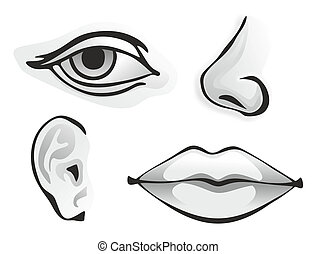 monochrome illustration of different human sense organs