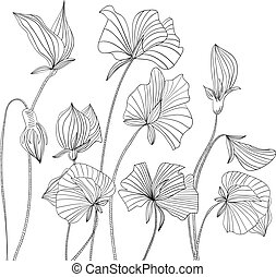 Sweet pea flowers - Monochrome illustration Sweet pea...
