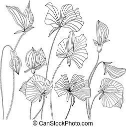 Monochrome illustration Sweet pea flowers