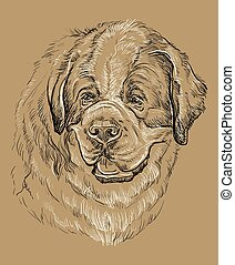 Monochrome St. Bernard vector hand drawing portrait - St....