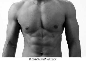 Monochrome Torso - A monochrome shot of a muscular male ...