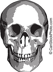 Monochrome vector graphics - human skull